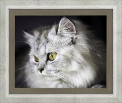 cat, framed