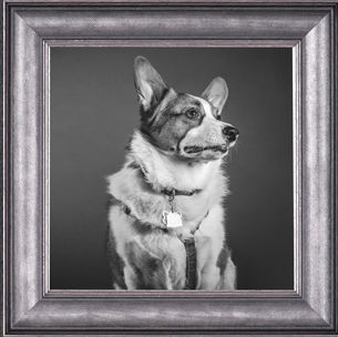 dog, framed