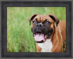 dog, framed