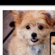 SFA-Personalized-Dog2-1