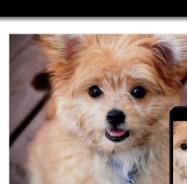 SFA-Personalized-Dog2