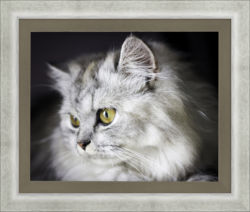 cat, framed